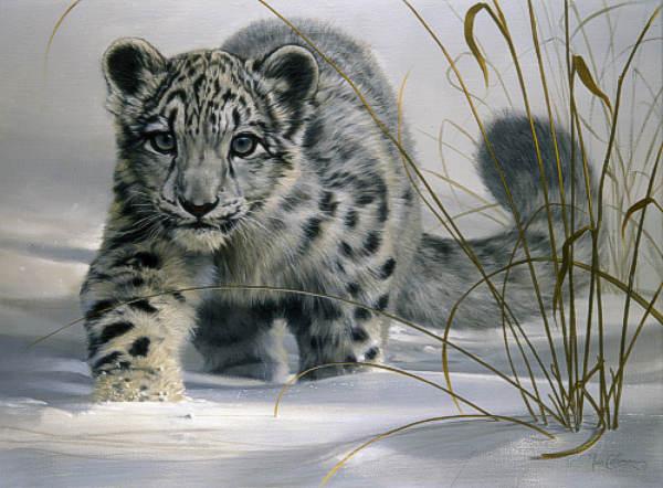 Slike životinja L19f_snow_leopard_cub