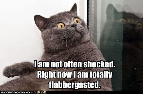 shocked_lol_cat.jpg